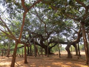 Aurobindo ashram 2